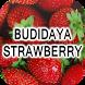 Budidaya Strawberry by Nietzhee