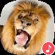 Appp.io - Lion Sounds
