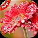 Beautiful Flowers Wallpapers by HD Wallpaper Studios