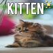 Kitten Wallpapers by Rake App