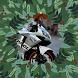 Быстрые и Красивые Мотоциклы