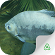 Fish Guide by Agrimind