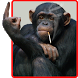 Funny Monkey Live Wallpaper by iim mobile
