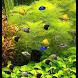 Green Aquarium LiveWallpaper by SuperCass