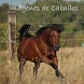 Imágenes de Caballos by Daniel Tejeda Galicia