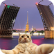 Find the Cat in St. Petersburg by MiRapps