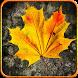 Autumn Frame Photo by Photo Art Slution