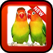 love bird wallpaper by Harmonis dev