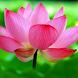 Hiển Đạo -Thanh Sĩ - Kinh Phật by NguyenDoAnhKhoa