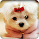 Cute Puppy Wallpaper by Best HD Free Live Wallpapers