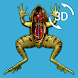 Visual Anatomy 3D - Frog by GraphicViZion