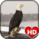 Eagle Bird HD Wallpaper by Ash Tech Apps