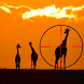 Great African Safari Sniper by New and Addictive Top Free Adventure Games