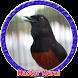 Murai Batu Masteran MP3 by Goodapps Project