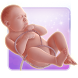 Gaia My Baby 3D by Gaia Technologies Plc