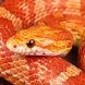 Beautiful Snake Live Wallpaper by ASankt