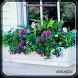 Window Boxes Planters by bakasdo