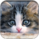 Love Kitty theme – fluffy cat by Cool Soloto Themes