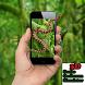 Snake On Screen Free