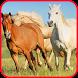 Horse-spirit game 2 by prodevgame