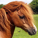 shetland pony wallpaper by Dark cool wallpaper llc