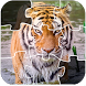 Animal Puzzles Jigsaw for Kids by Free Puzzle Games