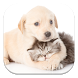 Cat and Dog Live Wallpapers by GL Live Wallpapers
