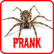 Spider Scare Prank by Adults Apps Store