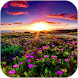 Sunset Meadow HD Wallpaper