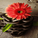 Cute Red Flower LWP by Daksh Apps