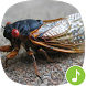 Appp.io - Cicada Sounds by Appp.io