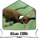 Suara Burung Cililin +1000 Kicau by Terkicaulah
