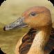 Kicau Burung Belibis by KicauApp