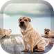 Shar Pei Pack 2 Wallpaper by PegasusWallpapers