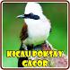 Kicau Burung Poksay Gacor by Kicau Burung Dev