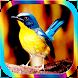 Masteran Burung Tledekan by Jayakerta Bizz
