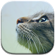 Cat Live Wallpapers by GL Live Wallpapers