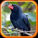 Canto de Bico de Pimenta by Suporter App