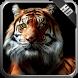 Tiger Wallpaper by MagicIdea