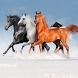 Horses Recount by Mircea Rusu A.V.