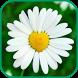 Лекарственные травы и растения by kukipukie