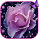 Rose aroma gleam purple theme by Free new hot colorful themes