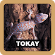 Tokay Sound Effect by Juns Project