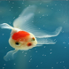 Cute Fish Live Wallpaper by Live Wallpaperss