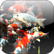 Koi 3D Video Live Wallpaper by 3D Video Live Wallpapers
