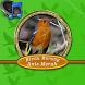 Kicau Burung Anis Merah Mp3 by Adeliascu