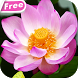 Blooming Lotus Video Wallpaper by HD Video Themes