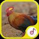Suara Pikat Ayam Hutan by Ringtonesia Lab