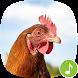 Appp.io - Chicken Sounds