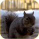Squirrel 3D Video Wallpaper